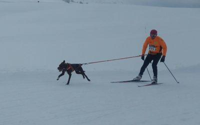 Curso de Skijoring en Belagua